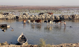 The marshlands of Iraq